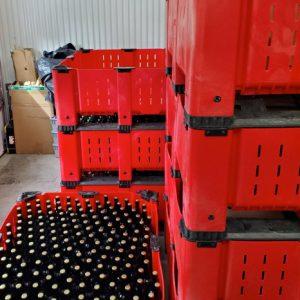 Emballage des cidres biologiques de la Cidrerie Compton